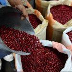 Con la importación de frijol, las autoridades hondureñas esperan que se reduzca el precio de este en el mercado.