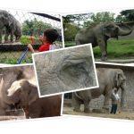 10 imágenes para recordar a Manyula tras cuatro años de su partida