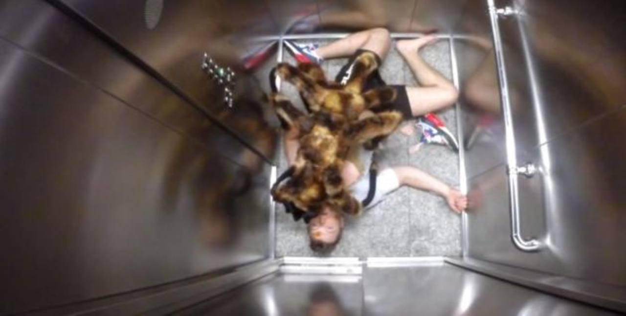 Video: Terror por nueva especie gigante de araña