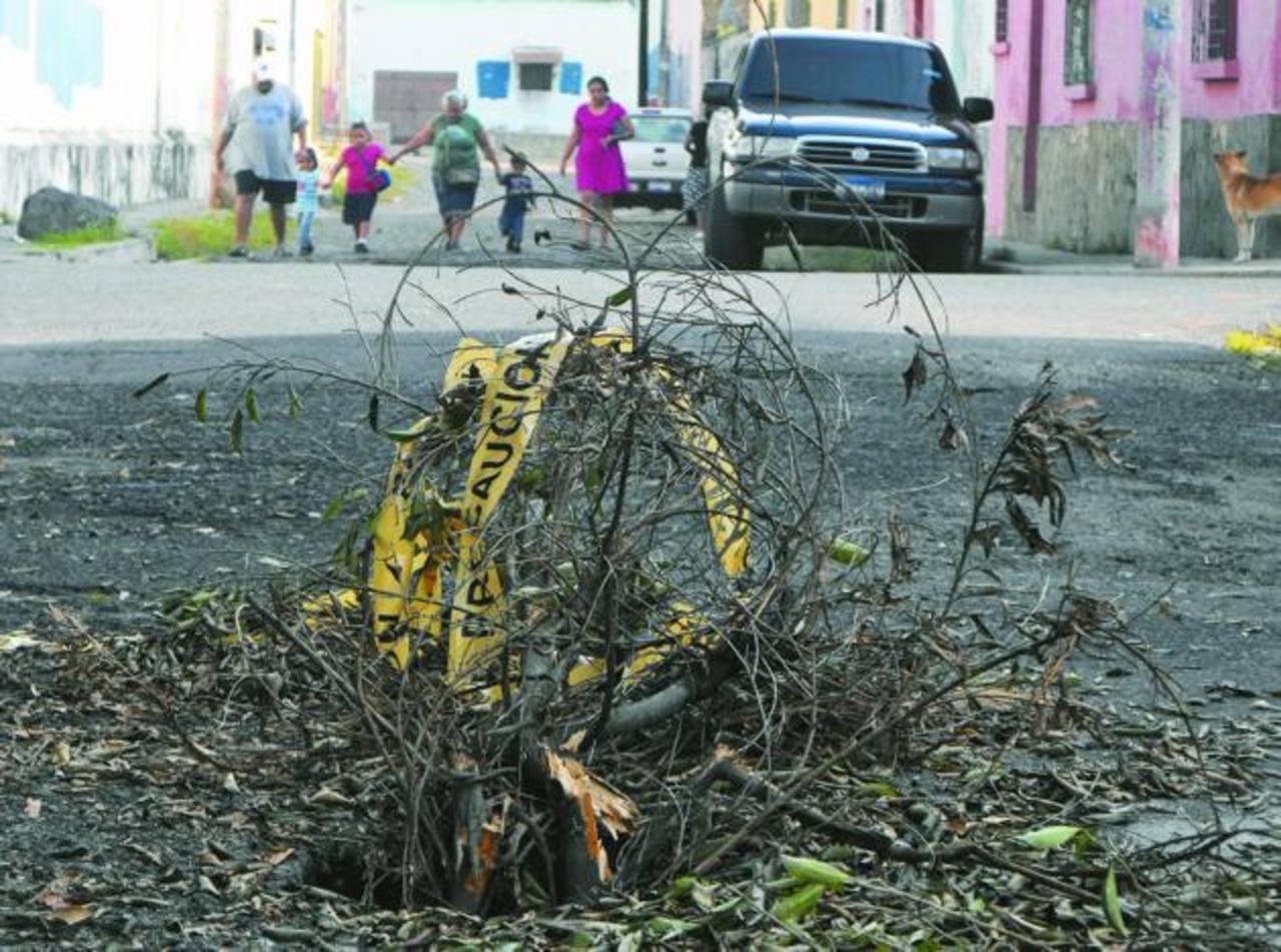 Personas han colocado ramas en la cárcava para evitar un accidente. Foto EDH/ MAURICIO GUEVARA.