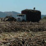 La sequía, además, podría impactar en menor rendimiento de azúcar por manzana cultivada en las plantaciones. Foto EDH/archivo