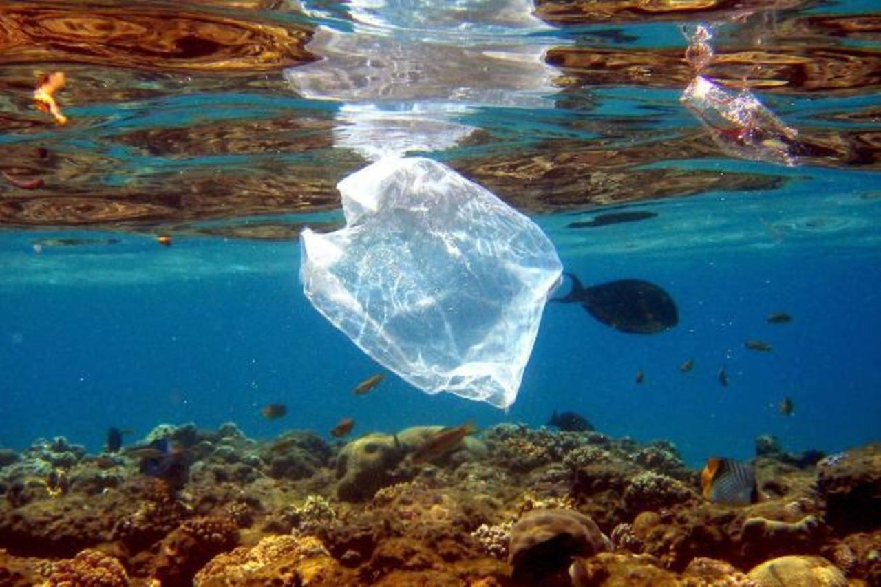 En los océanos viven entre un 10 y un 30 % más peces de los que se pensaba hasta ahora. Foto EDH