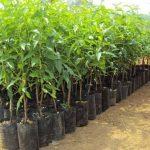 El compost facilita la nutrición de todo cultivo