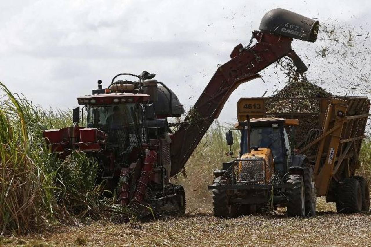 La cantidad de productores de caña de azúcar ha crecido en los últimos años. Foto EDH / Archivo
