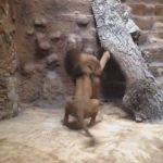 Video: Frente a niños, león mata a leona en zoológico de Polonia