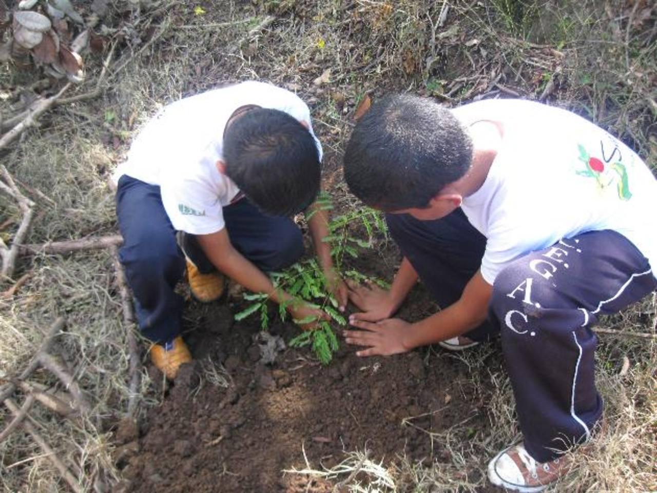 Los arbolitos fueron plantados a orillas de la calle, cerca del centro escolar Gilberto Cárcamo. foto edh / iris lima