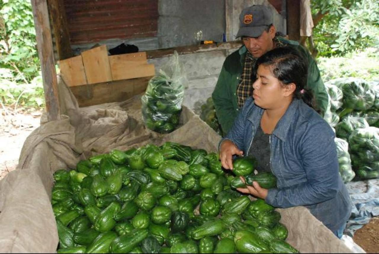 Agricultura familiar es vital para erradicar pobreza: IICA .