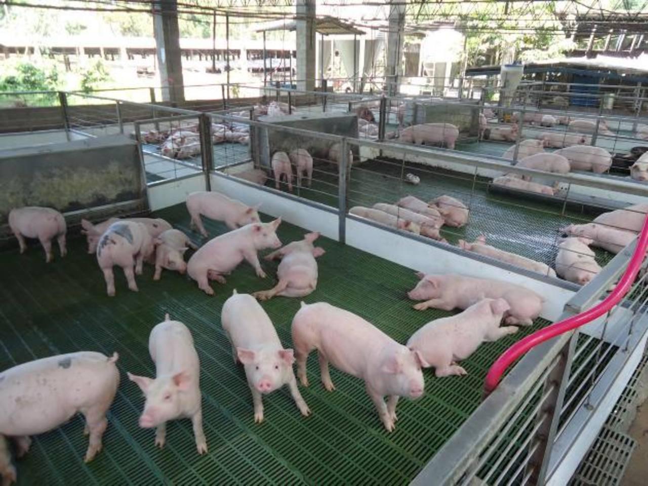 No se permite ingresar producto porcino desde Guatemala, según disposición del MAG y Hacienda. foto edh / archivo