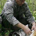 En una foto del 31 de agosto de 2008, Vladimir Putin colocando un collar con un rastreador satelital a un tigre siberiano de cinco años, en el extremo oriental de Rusia.