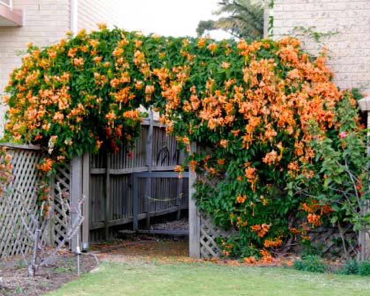 Plantas que dan belleza a todo sitio