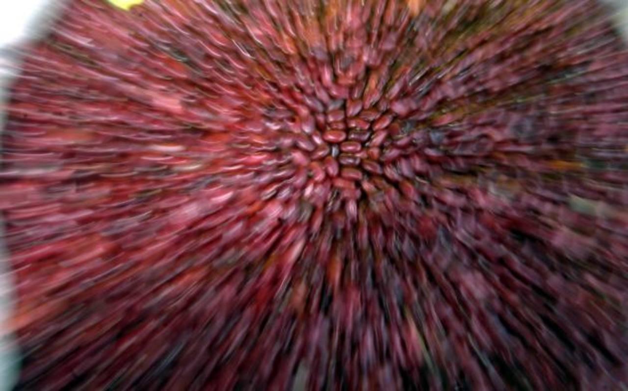 Según argumentan los comerciantes de frijol, a los salvadoreños no les gusta la calidad del frijol de Etiopía. foto edh / archivo