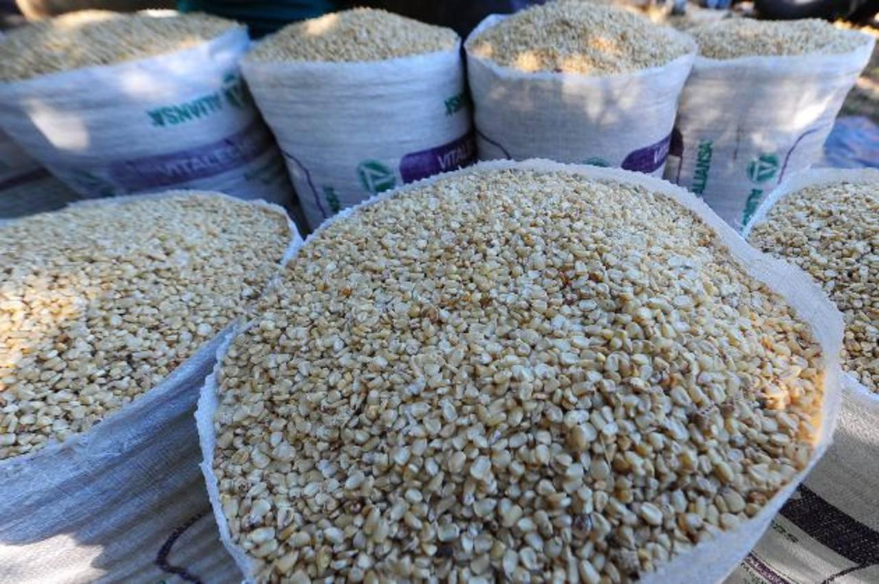 El 75 % del maíz blanco que utiliza Gumarsal para la producción de harina es cultivado en el país. Foto EDH