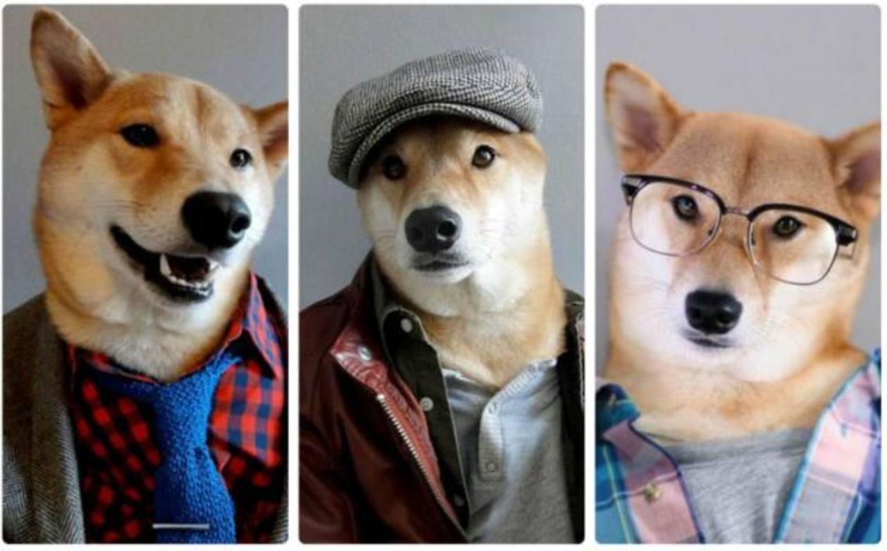 Fotos y Video: Bodhi, el perro modelo que gana $15 mil al mes
