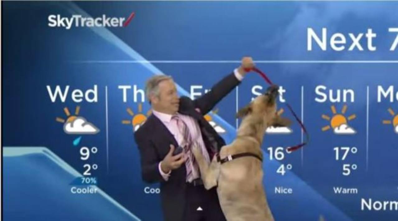 Video: Perro roba el show a periodista del clima