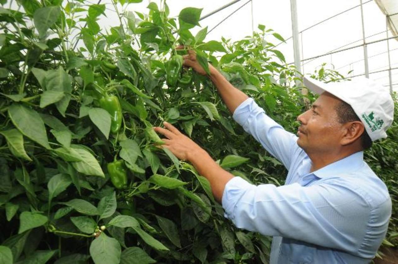 Walmart reconoce calidad de proveedores agrícolas | elsalvador.com