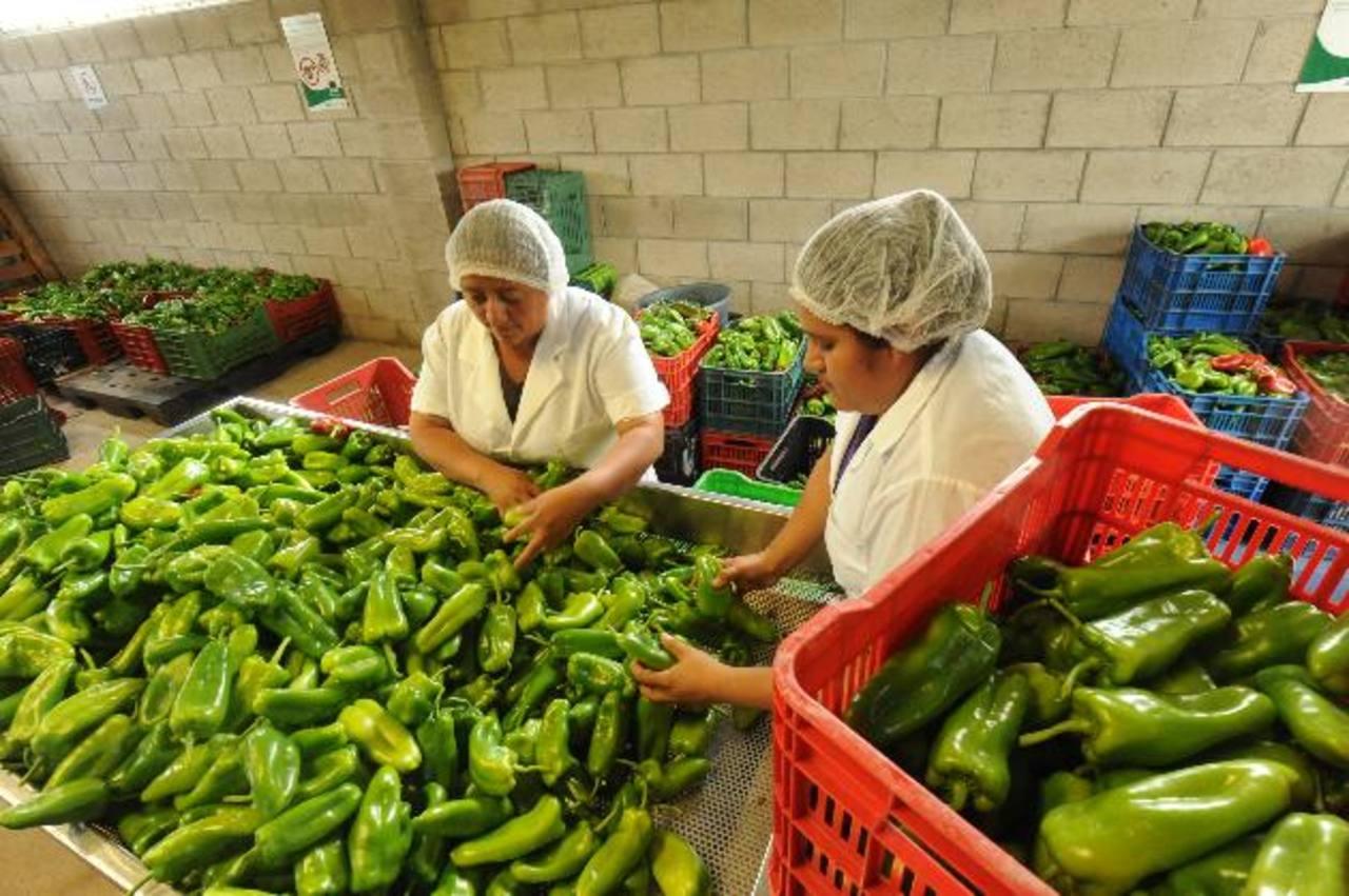 La empresa de don Miguel abastece este tipo de hortalizas a Walmart y genera empleo. foto edh / lissette monterrosa.
