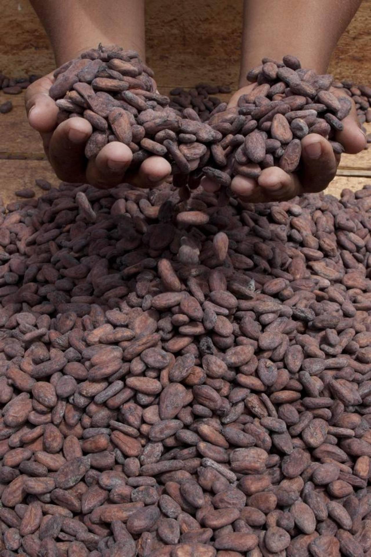 El cacao está siendo promovido por la misma FAO para mejorar ingresos en el campo. Foto EDH