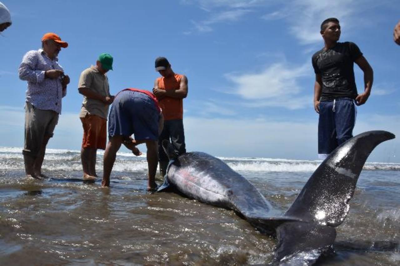 Pescadores y niños de la zona llegaron a ver la ballena a las orillas de la playa y lamentaban lo que le ocurría al enorme cetáceo. Foto EDH /Carlos Segovia