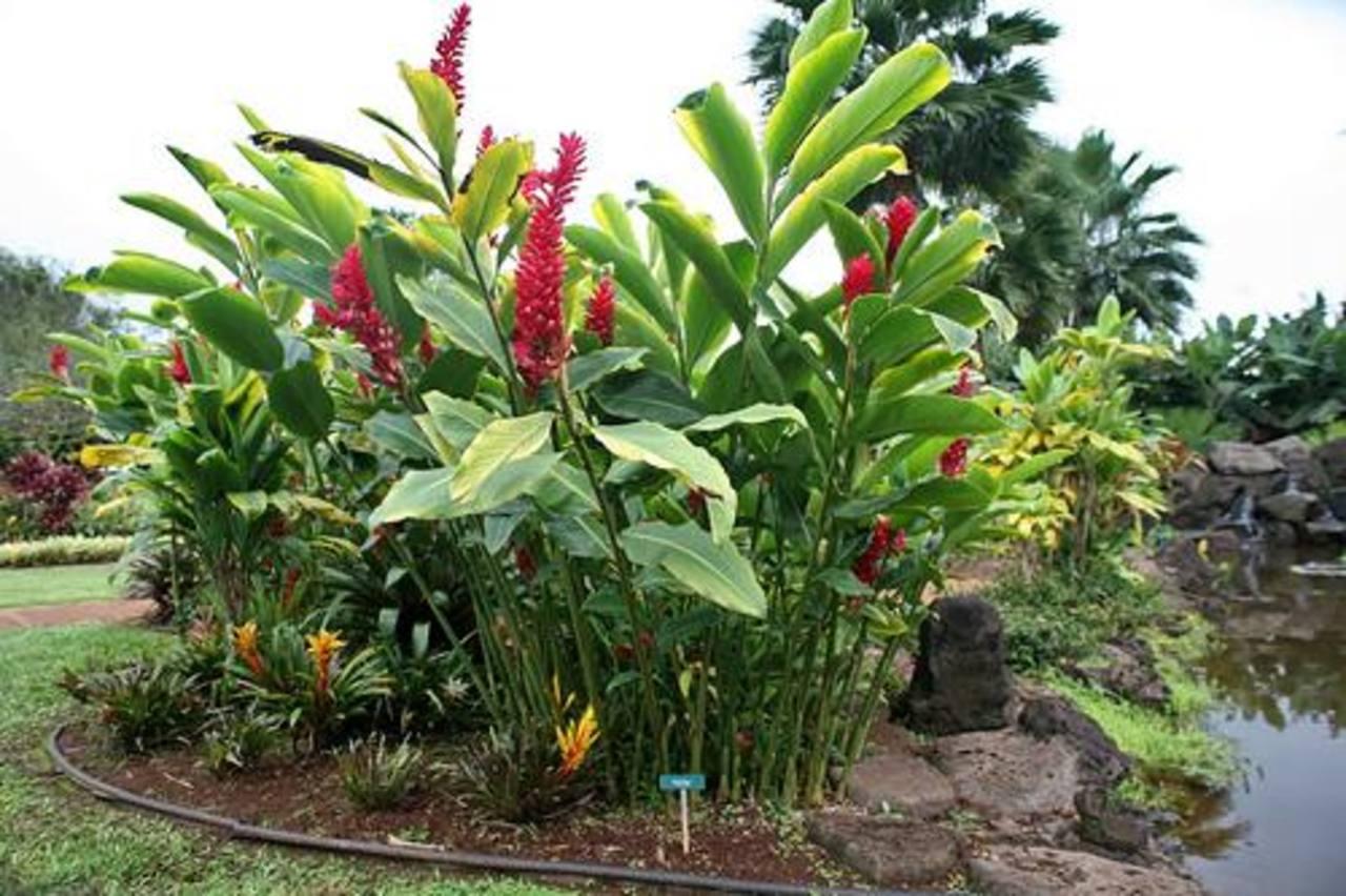 Decore jardines, parques o áreas rurales y disfrute