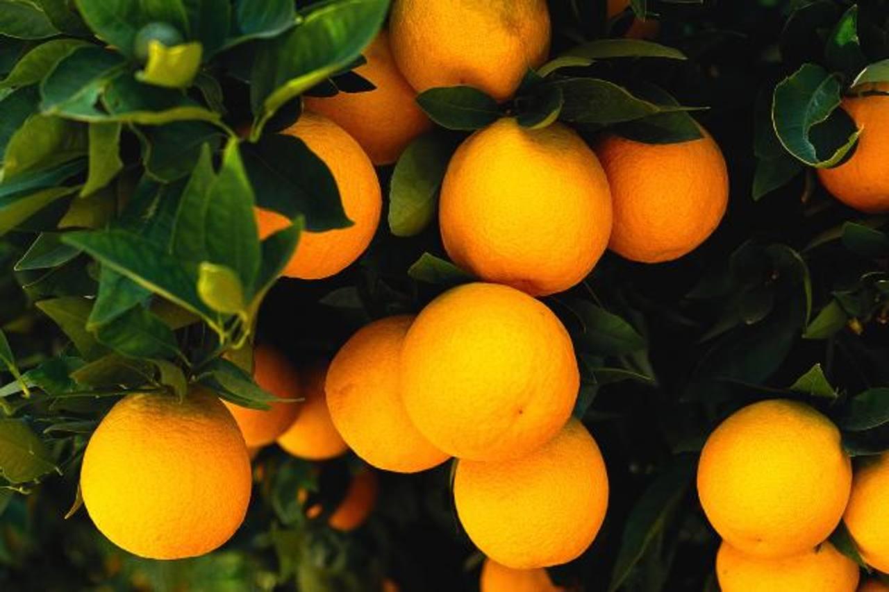 Panamá busca procesar jugos debido al excedente en su producción de naranja y piña. foto edh