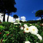 Flores que adornarán los camposantos