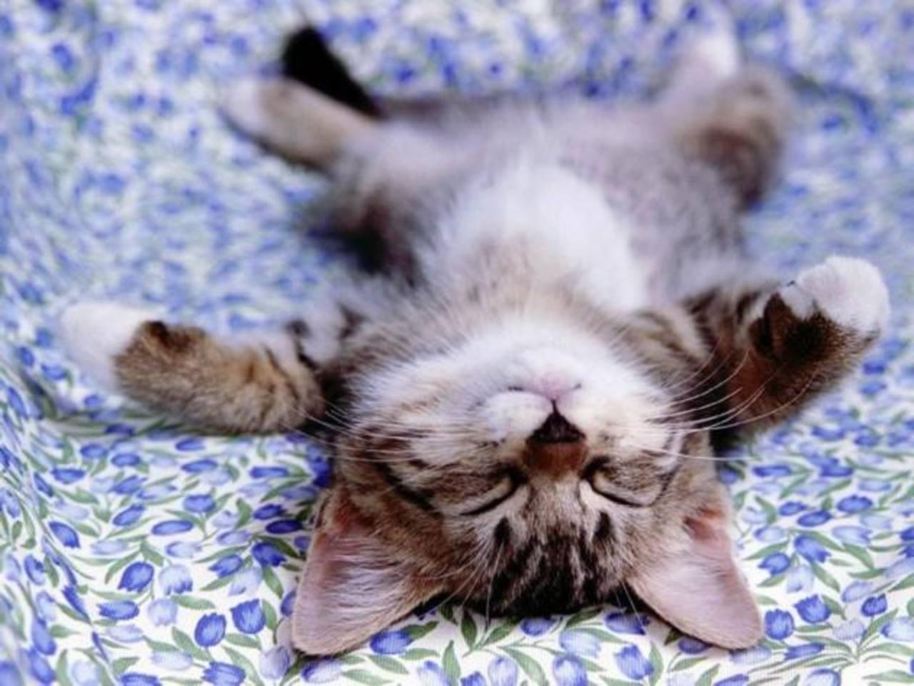 "Solicitan ""acaraciadores de gatitos"" en Reino Unido"