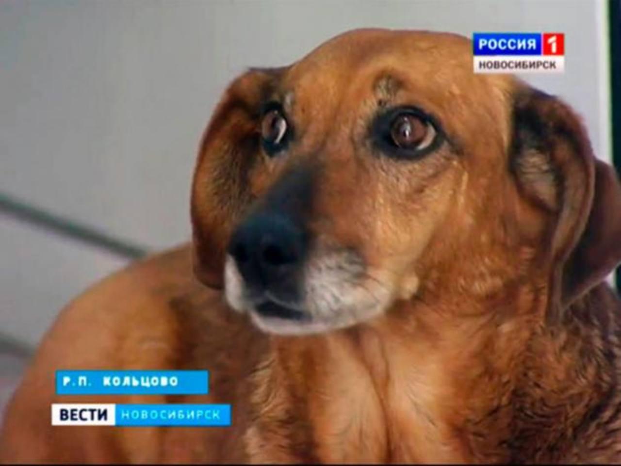 Tras un año, perro espera en hospital a su dueño quien ya falleció