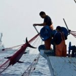 La pesca ilegal china suma más de 675 mil toneladas.