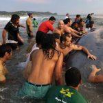 Muere ballena azul varada en litoral Pacífico de Nicaragua