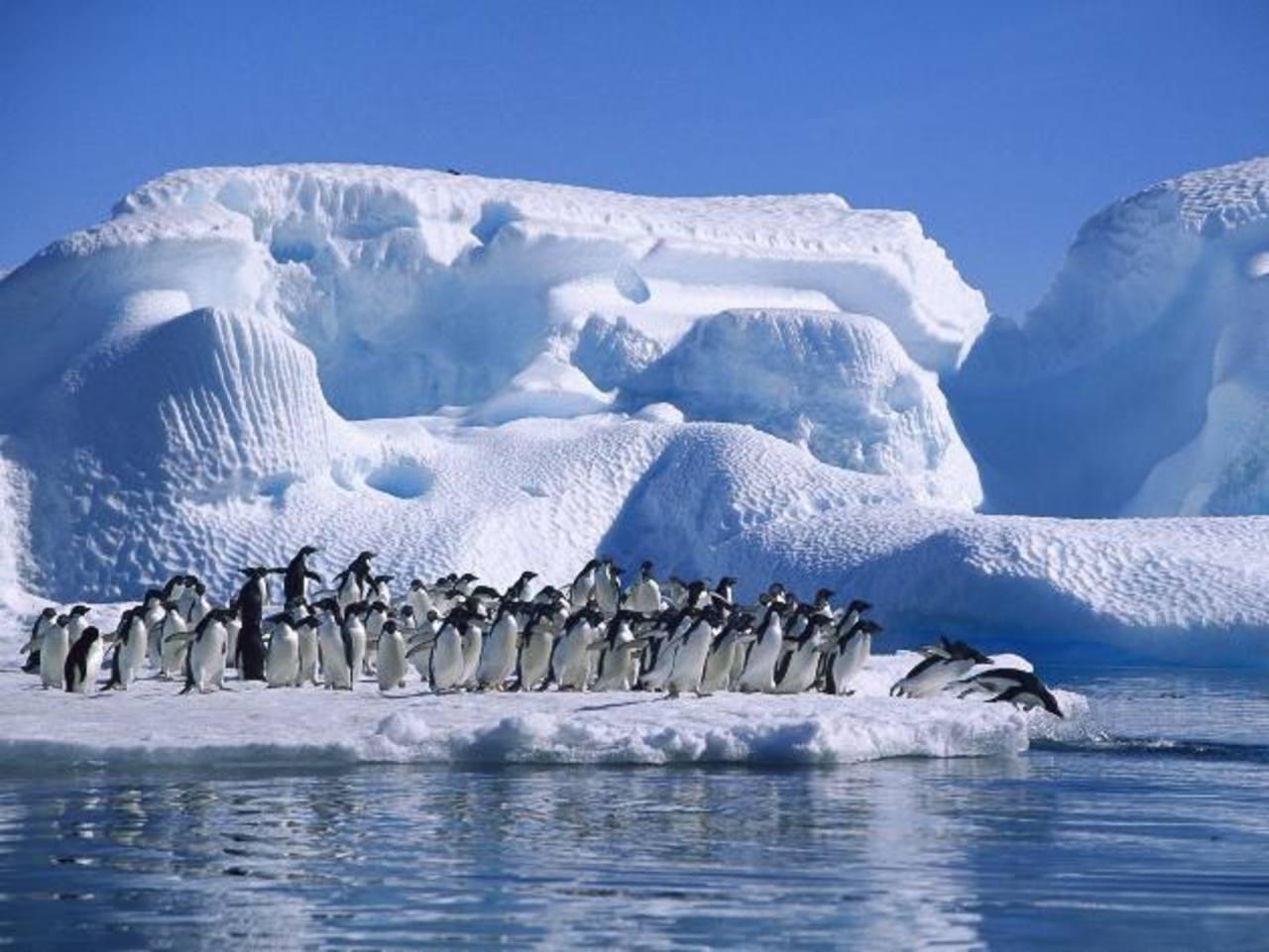 El estudio sobre el Polo Norte fue desarrollado por investigadores de la Universidad Autónoma de Barcelona, España.