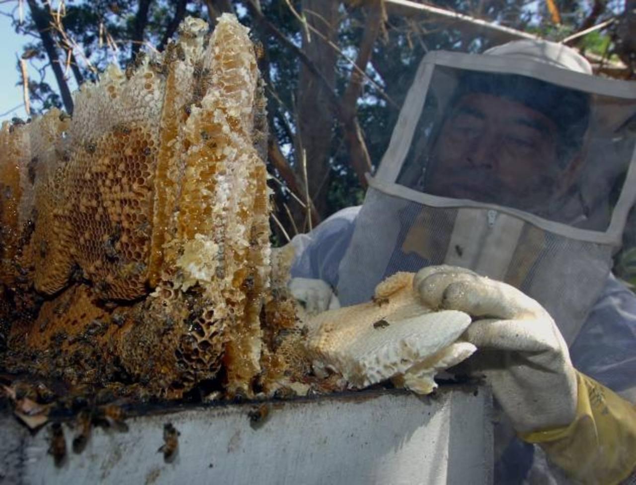 Con la tecnificación los apicultores pueden llegar a sacar 21 mil botellas de miel por cosecha.. foto edh / archivo