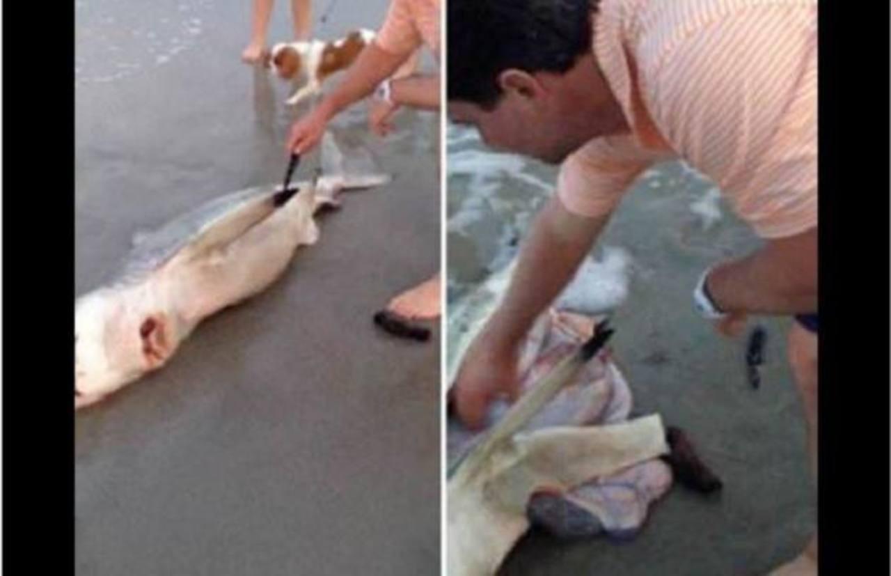 Captan increíble nacimiento de crías de un tiburón muerto