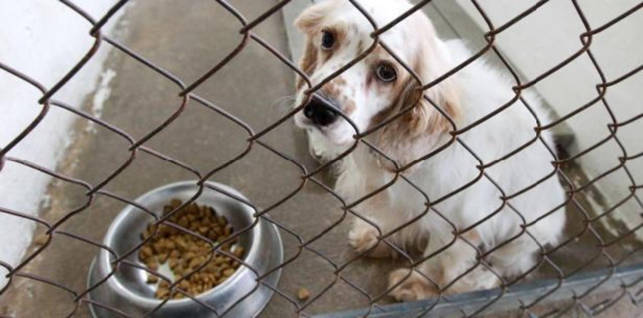 Asombroso caso de crueldad hacia animales en EE.UU.