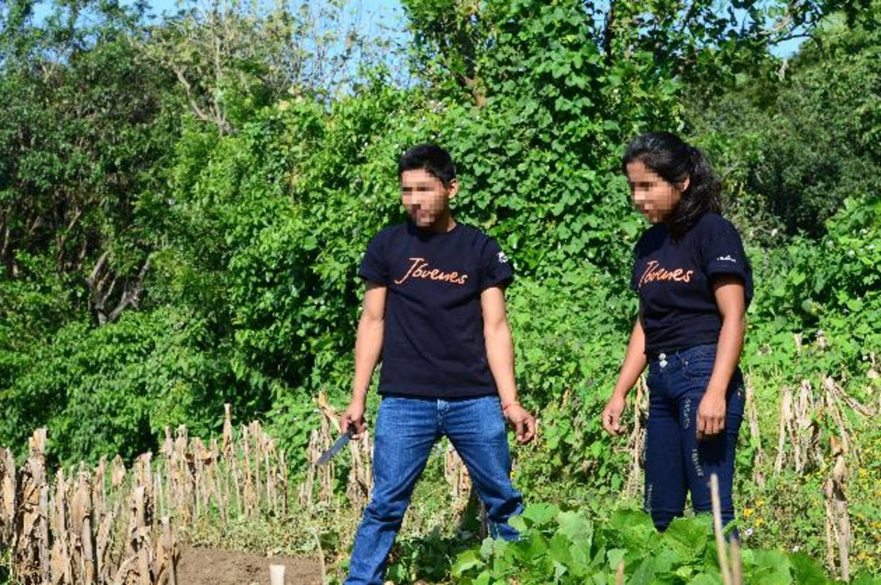 Duglas y Zulma trabajan echaron a andar su proyecto productivo de jícamas. edh / Ericka Chávez
