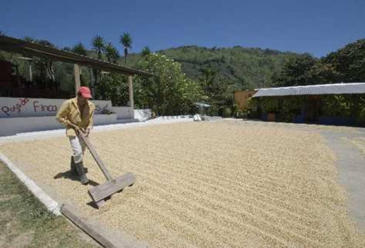 Guatemala con crecimiento de 10 % en rubro de exportaciones