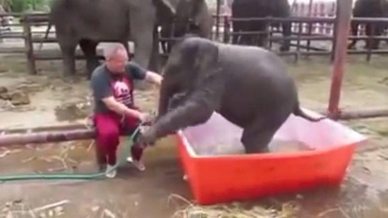 VIDEO: Pequeño elefante se divierte durante el baño
