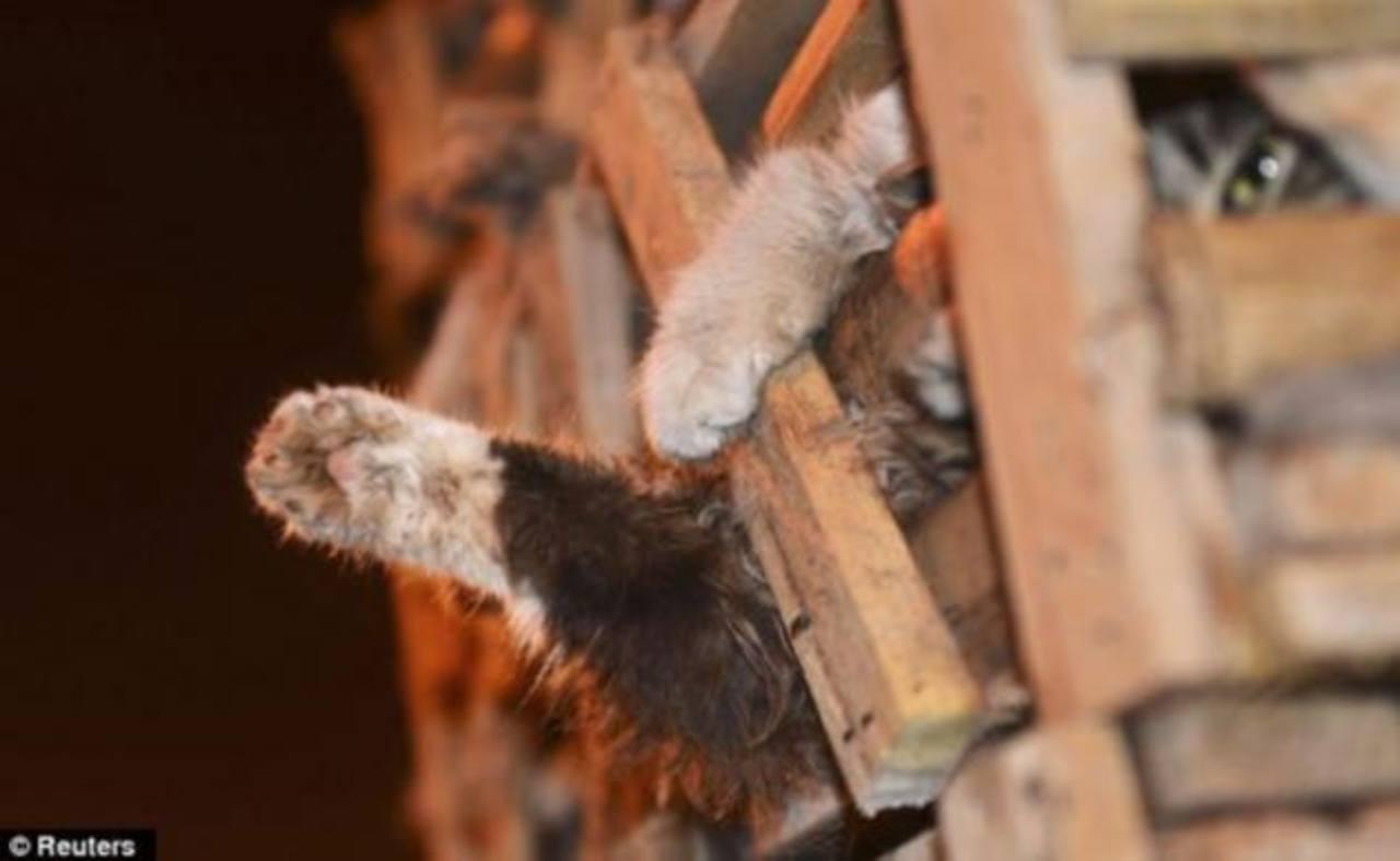Rescatan a mil gatos robados para vender su piel y carne en China