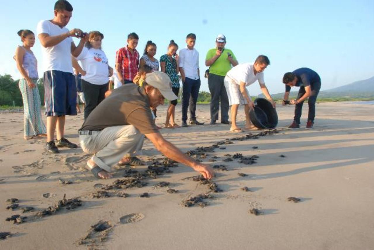 Gracias al vivero, más de cinco mil tortugas se han salvado. Fotos edh / insy Mendoza