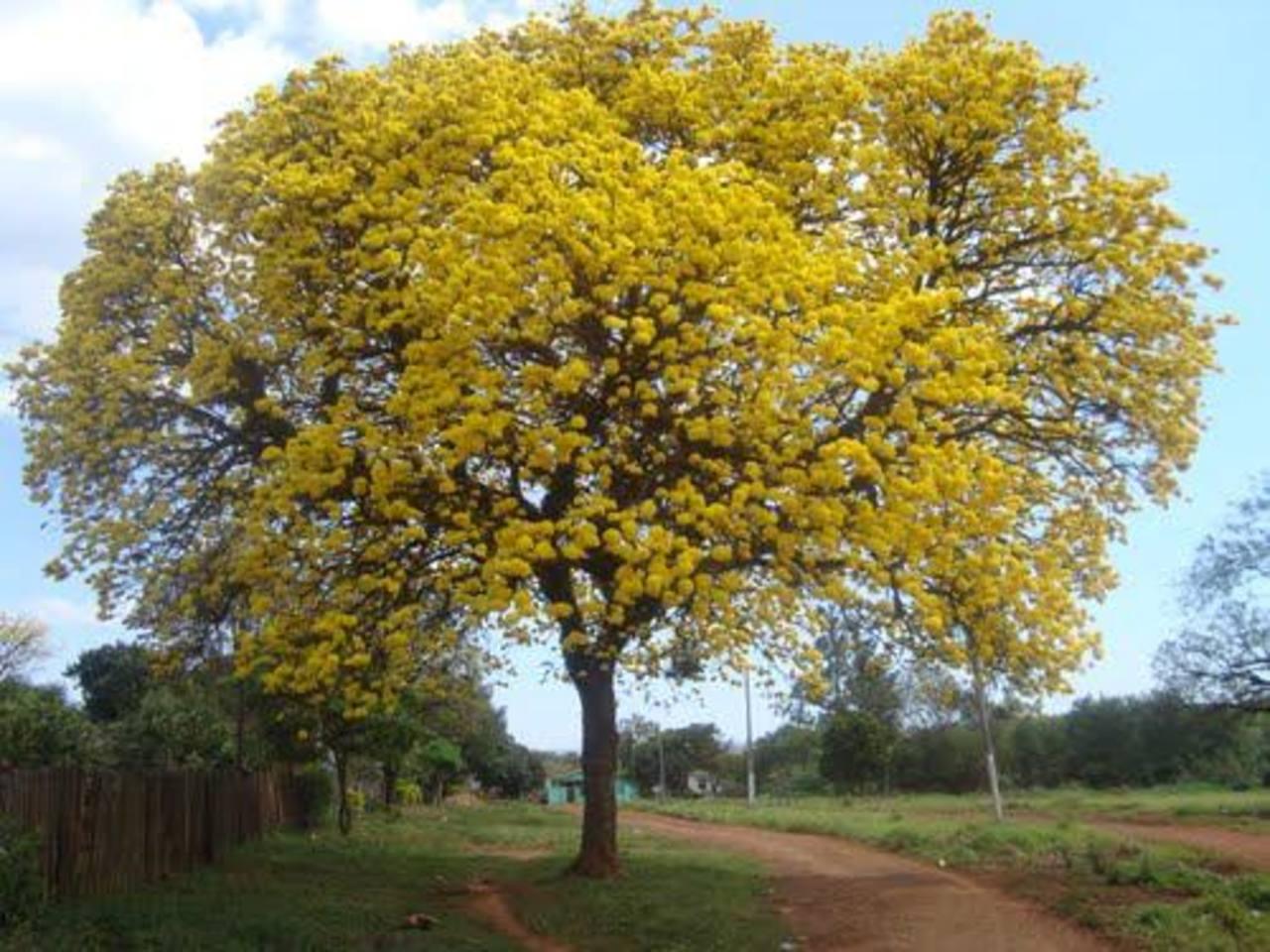 Cubra su terreno con flores de varios colores