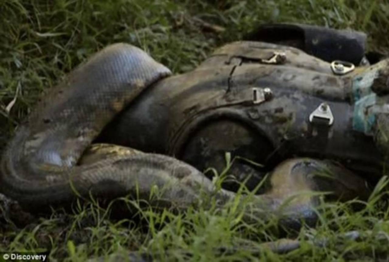 Video: Anaconda no se tragó a hombre en polémico programa