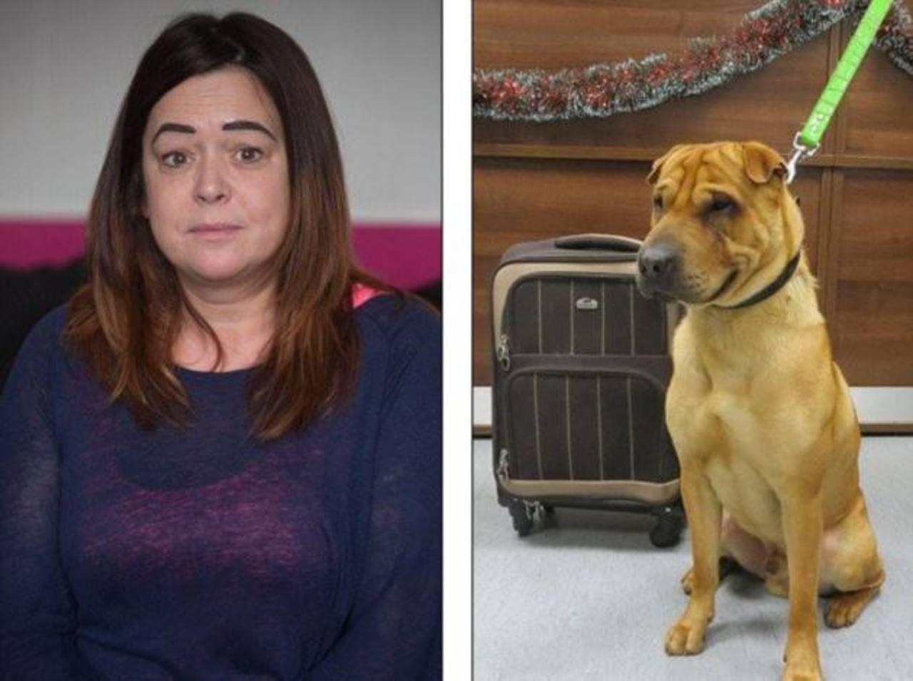Se resuelve misterio de perro abandonado en estación de Escocia