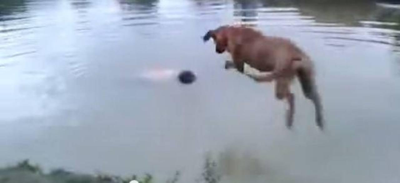 Momento en que el perro se lanza al agua a rescatar a su dueño