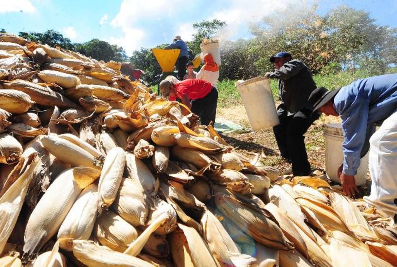 Los agricultores deben enfrentar las condiciones climatológicas que afectaron sus cosechas y los bajos precios con los que deben vender su producto. foto edh / archivo