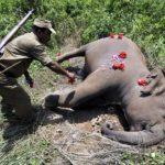 Kenia: Matan a cazador furtivo que mató a un elefante