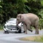 VIDEO: Elefante desata su furia en auto de turistas en Tailandia