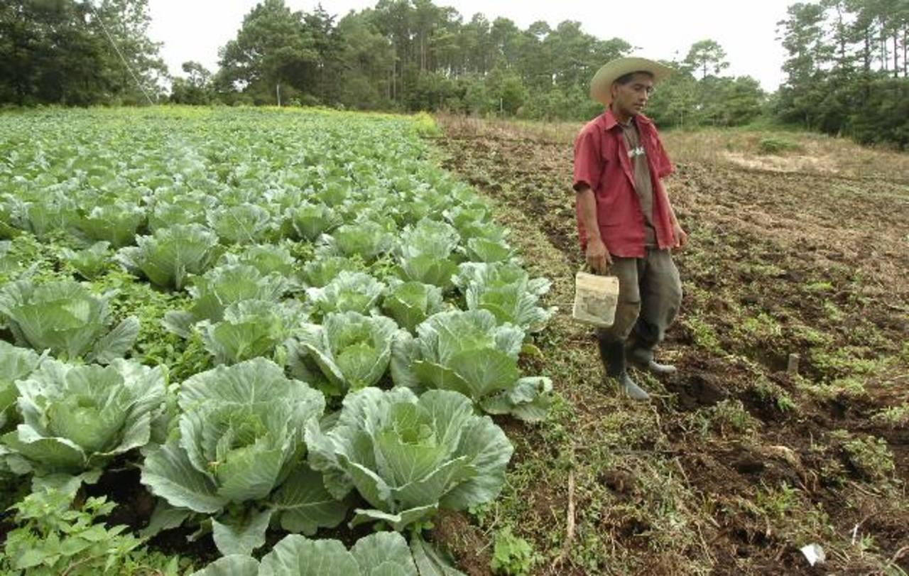 El Salvador no tiene, actualmente, la capacidad de suficiencia alimentaria. foto edh / archivo.