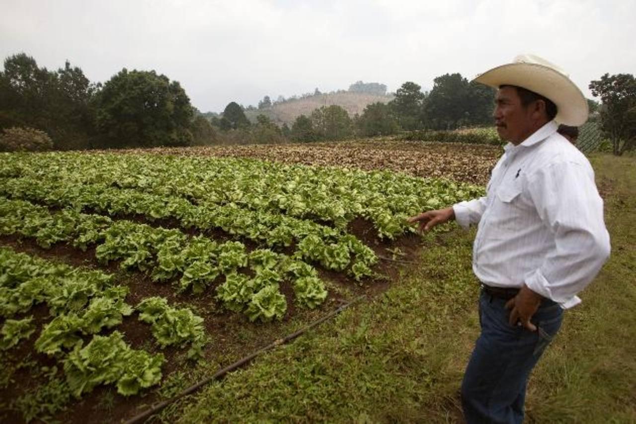 La idea del Gobierno es apoyar al agro para reducir el impacto de la sequía. foto edh /