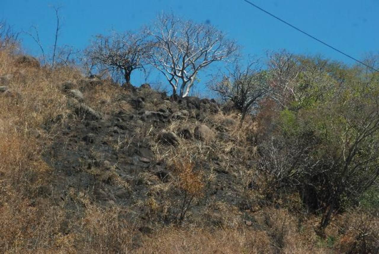 La mayoría de incendios reportados son en maleza, aunque los que más afectan son los forestales. Foto EDH / Insy Mendoza