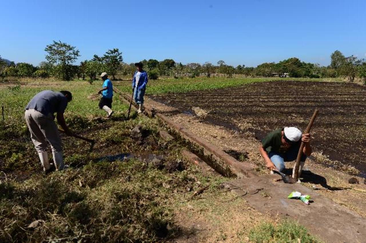 Los trabajadores agrícolas son una población de alto riesgo, dos a tres veces más propensos a desarrollar ERC, explicaron los científicos. foto