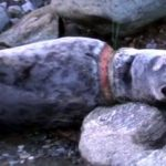 VIDEO: Increíble rescate de una foca estremece las redes sociales